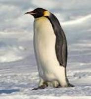 drunken penguin's picture