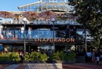 Snapdragon Bar - image 1